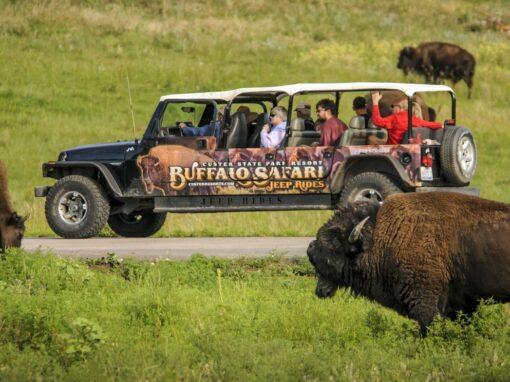 Buffalo Safari Jeep Rides