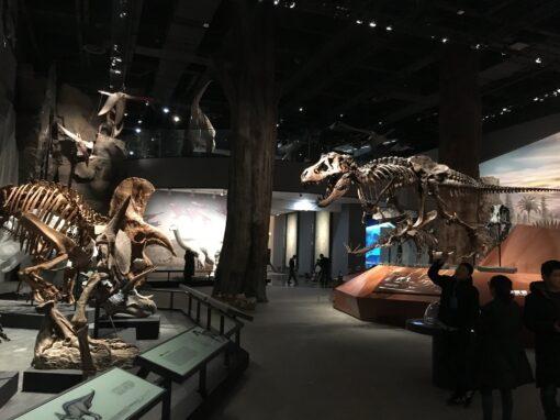 The Museum @ Black Hills Institute
