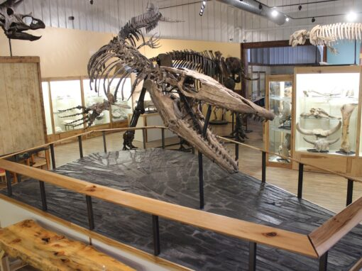 World Fossil Finder Museum
